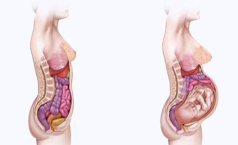 Как расположены органы у беременной на 20 неделе 11