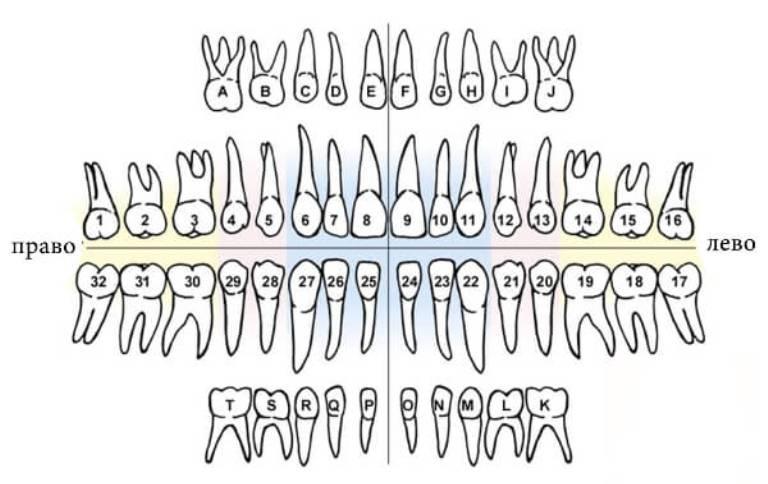 Буквенно-численная система нумерации зубов