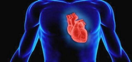 Где находится сердце у человека