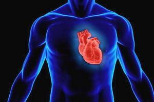 Где находится сердце у женщины