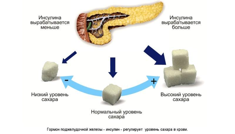 Эндокринная функция поджелудочной железы