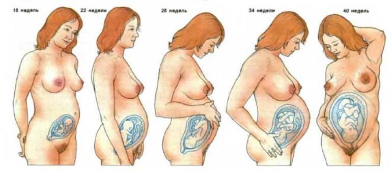 Этапы беременности