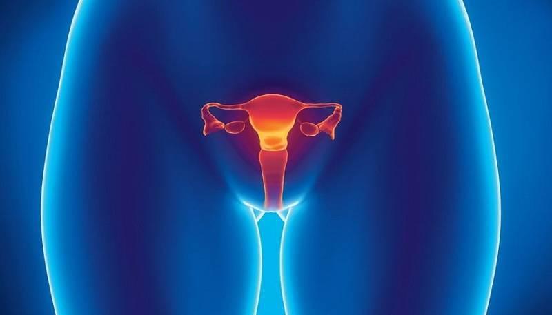 женская репродуктивная система