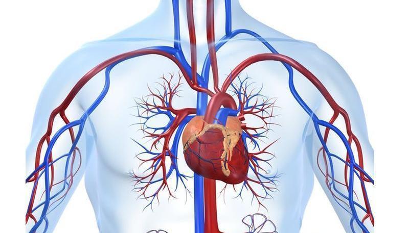 Нормальное расположение сердца