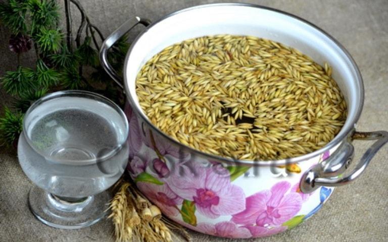 Овсяные зерна в воде