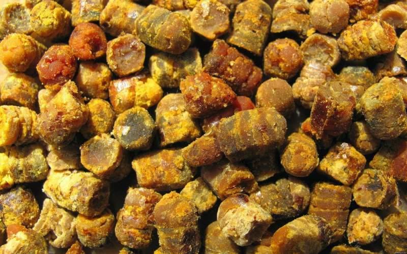 Лечебные свойства пчелиной перги Как принимать хлеб пчл