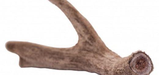 Бобровая струя от каких болезней лечит и как принимать настойку