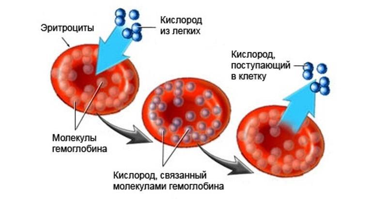 Цветовой показатель крови