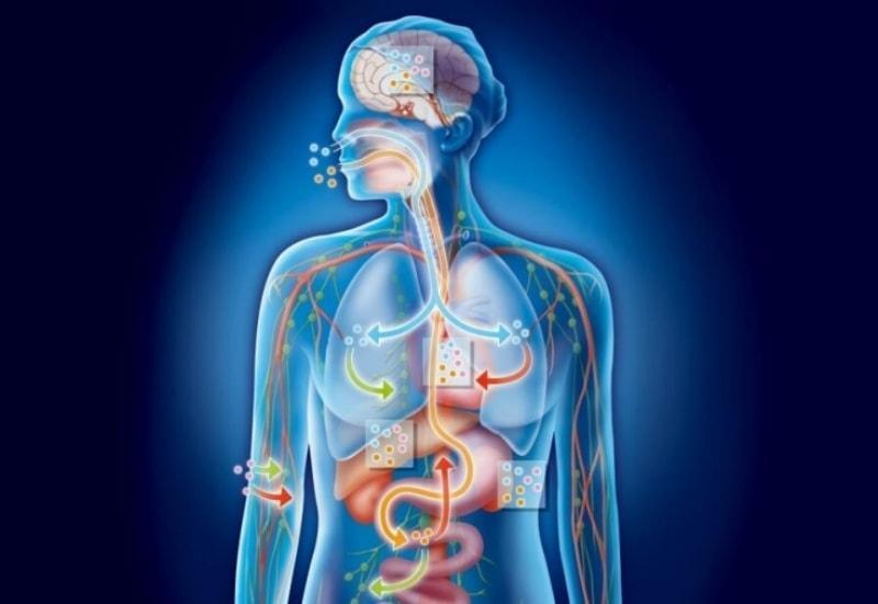 Токсины в организме