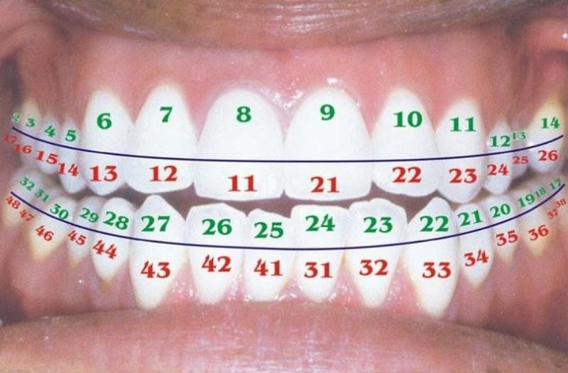 Универсальный метод нумерации зубов
