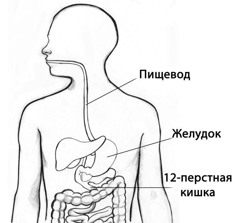 Как работает 12 перстная кишка. Строение, болезни и лечение двенадцатиперстной кишки
