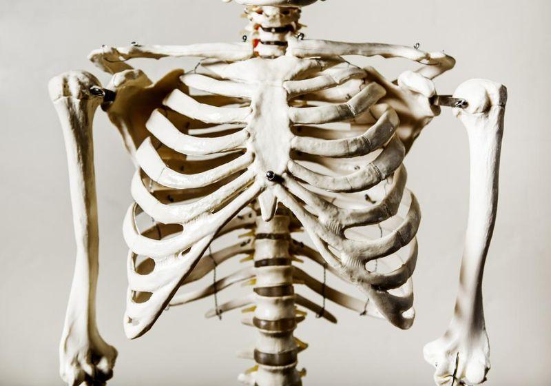 Анатомия человека: строение и схема расположения внутренних органов брюшной полости, грудной клетки, малого таза