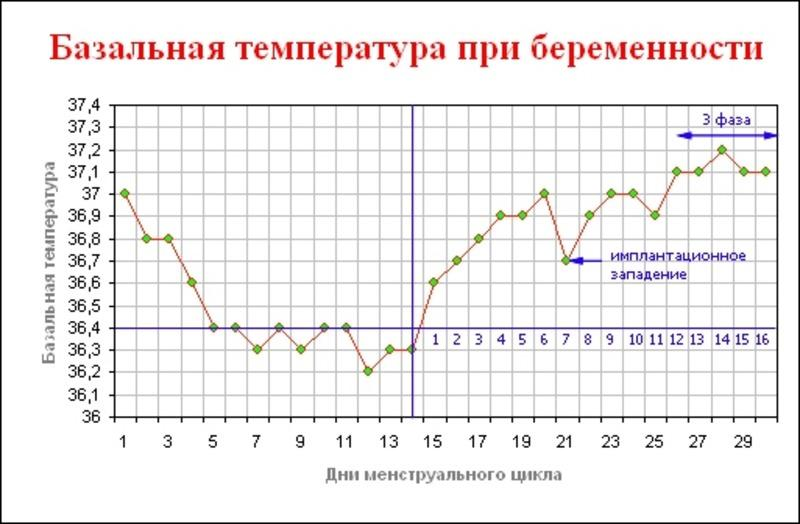 кривая базальной температуры при беременности