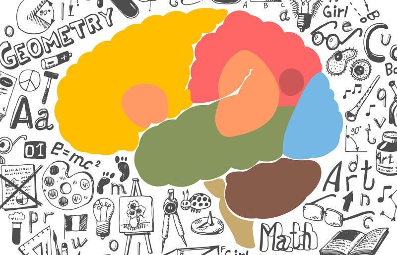 Развитие мозга и умственных способностей