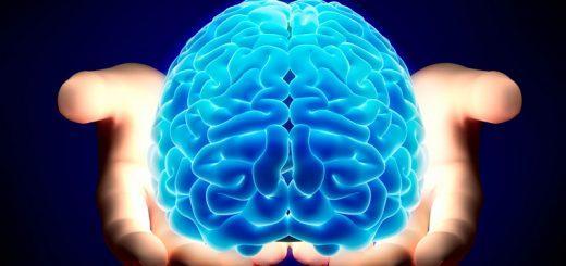 Головной мозг: отделы, строение и функции