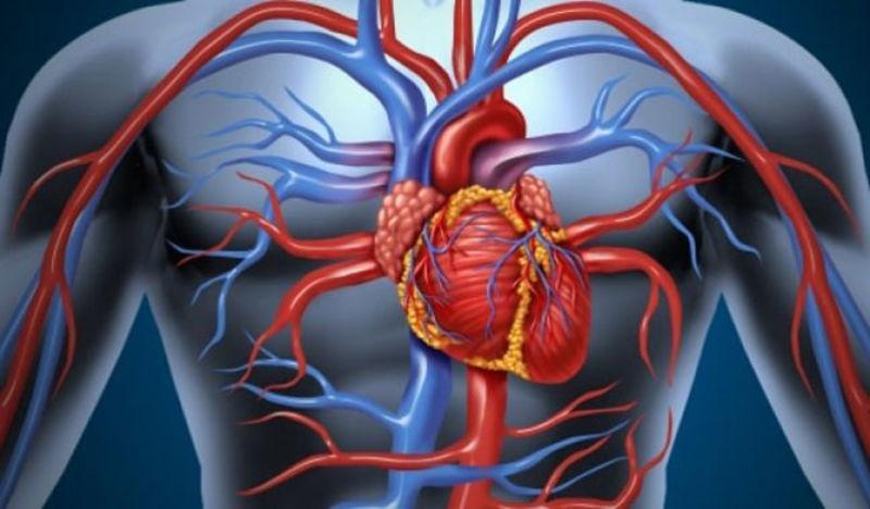 патологии сердца и сосудов