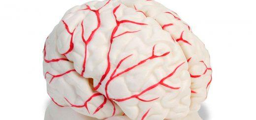 Чистка сосудов головного мозга и всего организма
