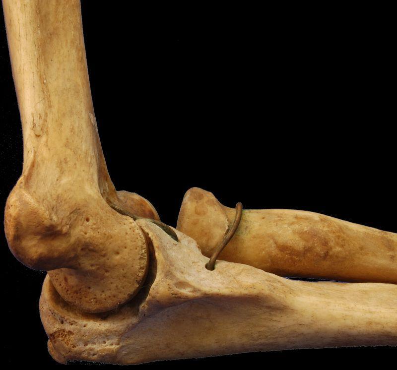 Трубчатая кость